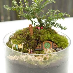 Hobbiton miniature garden