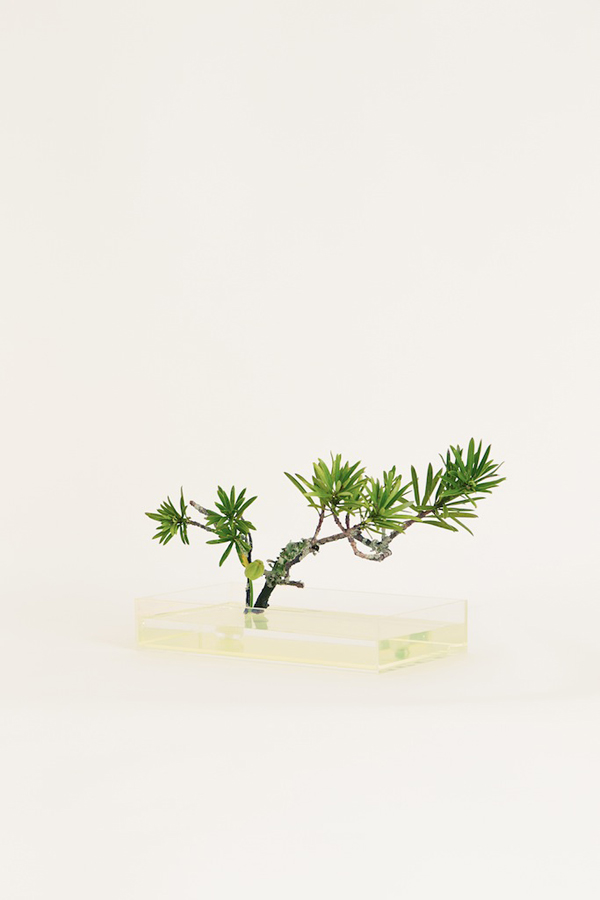Plantica Ikebana Kit via the red thread