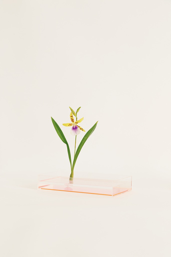 Japanese design at it's best: Plantica Ikebana Kits