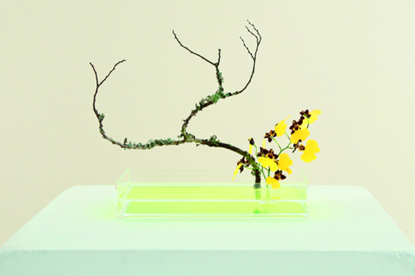 Plantca Ikebana via the red thread