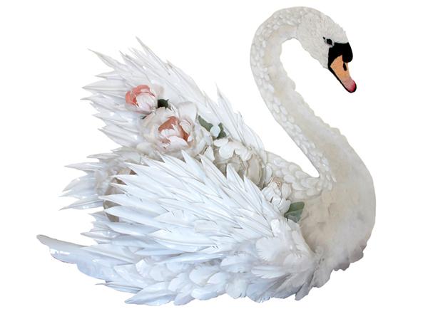 Karen Nichol swan