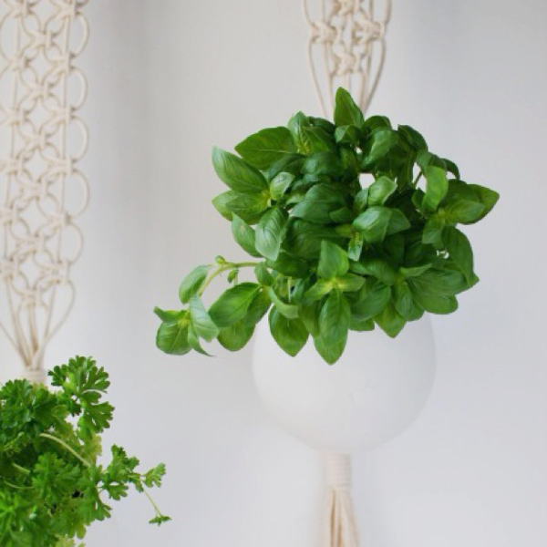 the-red-thread-macrame-herb-garden