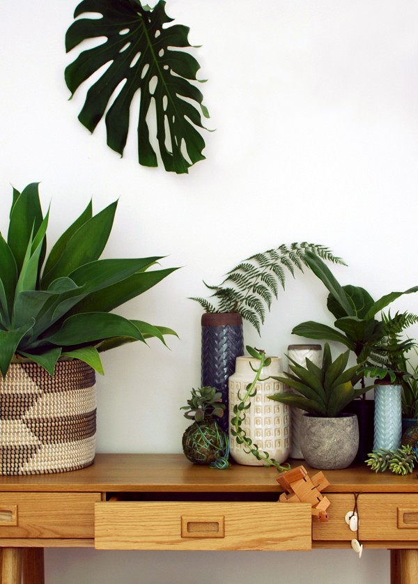 Freedom_indoor_plants_via_we-are-scout.com