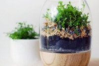 Tutorial: Make a moss terrarium (it's easy!)