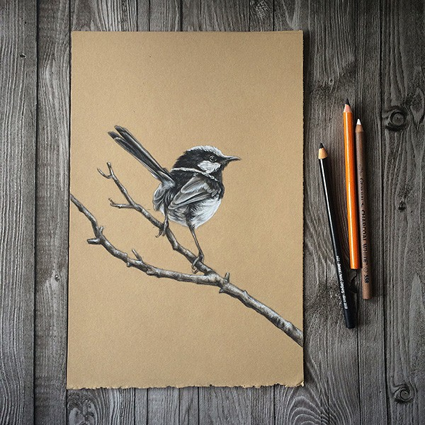 Alex Louisa - Charcoal Wren
