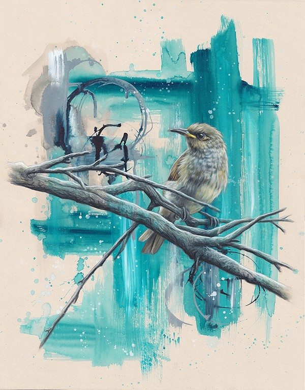 Brown Honeyeater. Alex Louisa - hyper realistic art