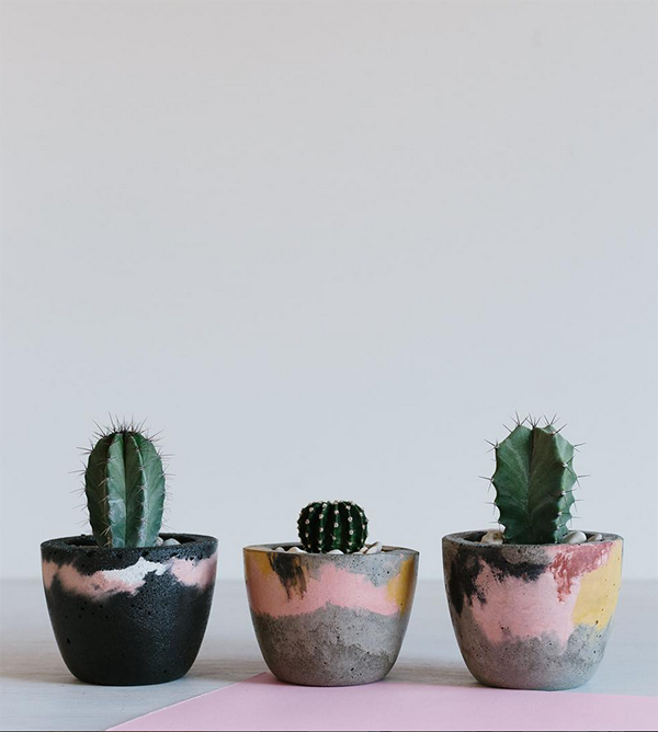 Fox and Ramona cactus planters.