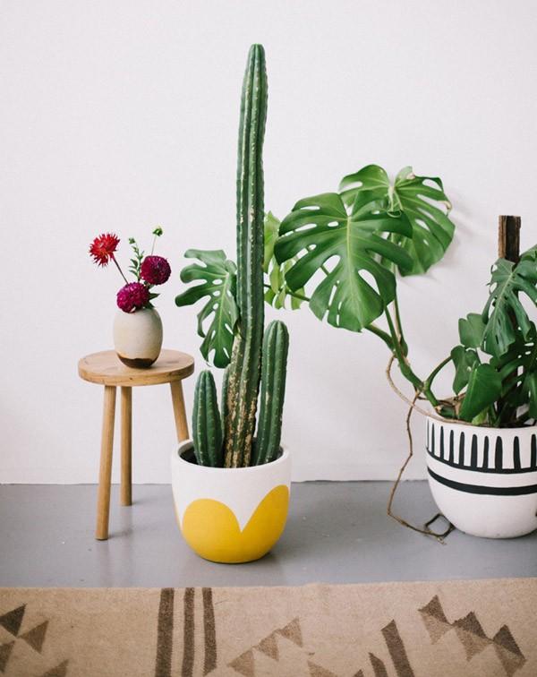 pop-and-scott-pot-mustard-petals-mali2_6
