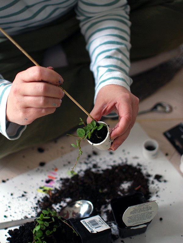 Filling a plastic end cap with potting mix and a terrarium plant. Skewers and spoons come in handy here! Scandi summer house-style doll house makeover. Photos by Lisa Tilse for We Are Scout.