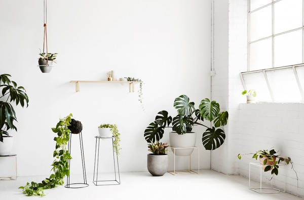 Indoor plant inspiration with Ivy Muse plant stands