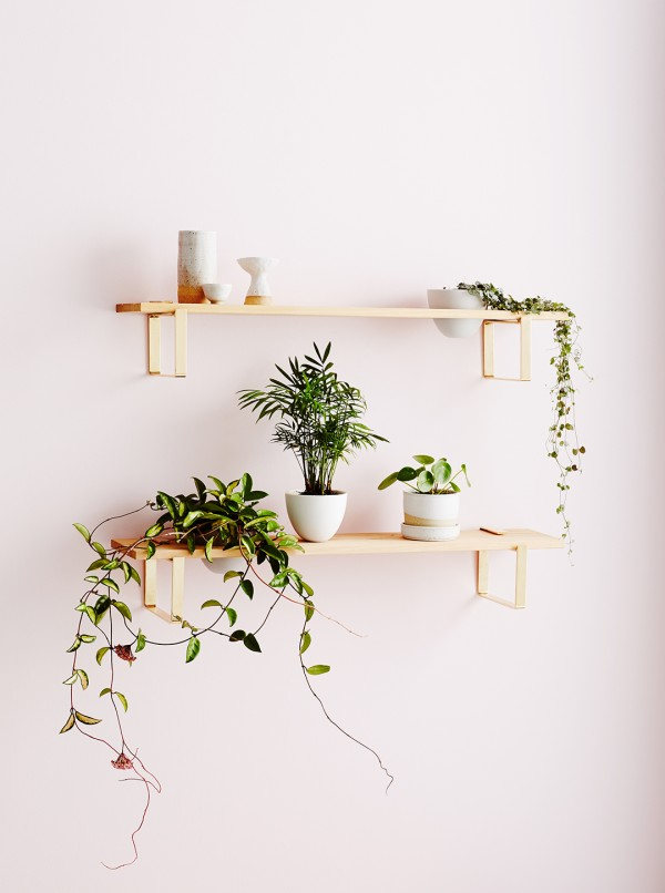 Indoor plant inspo with Ivy Muse