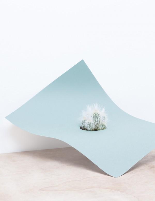 ART : Martina Lang plant paper series