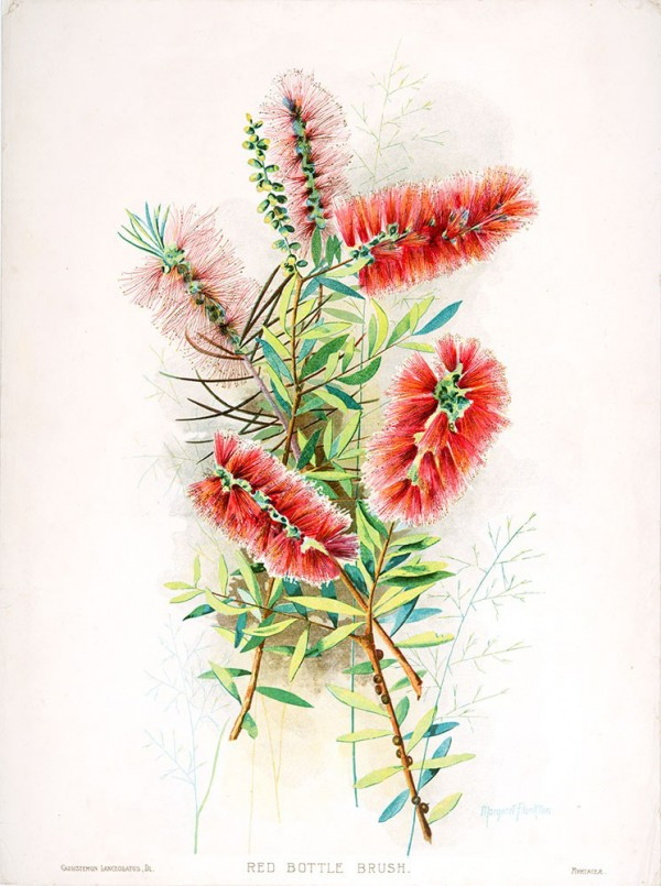 Royal Botanic Garden Sydney's 200th Birthday Collection of limited edition botanical prints