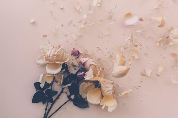 Australian photographer Anna Thomas: Fractured Flora series