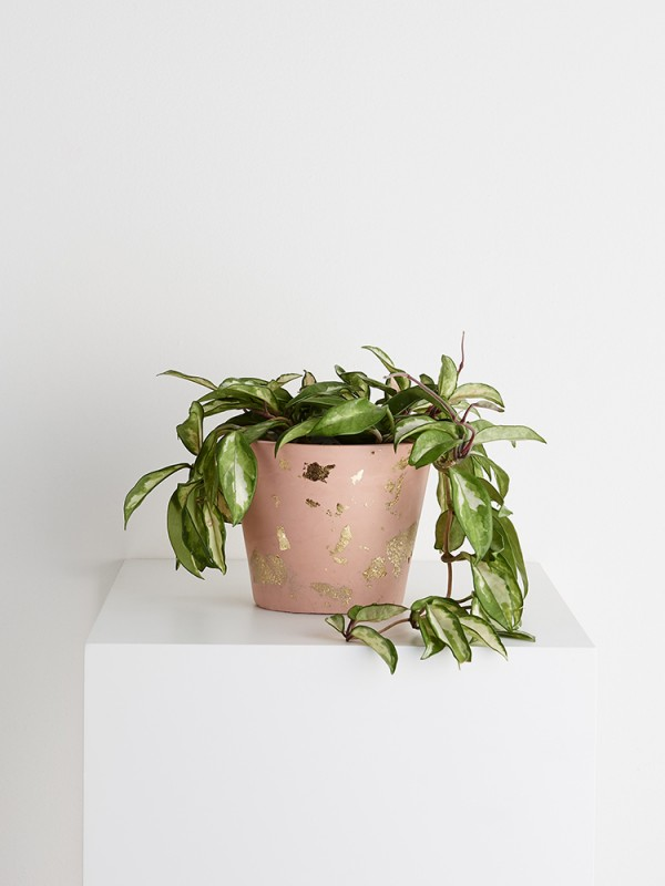 Capra Designs eco water-based resin planter in peach and gold.