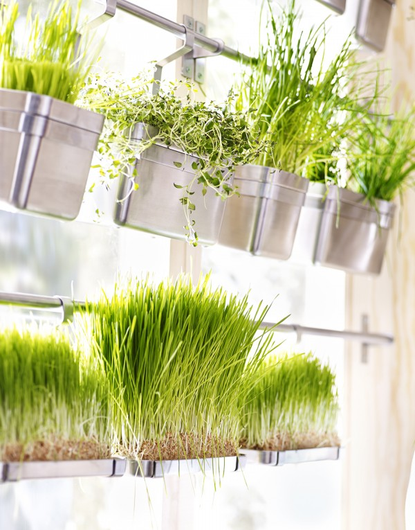 Vertical kitchen herb garden