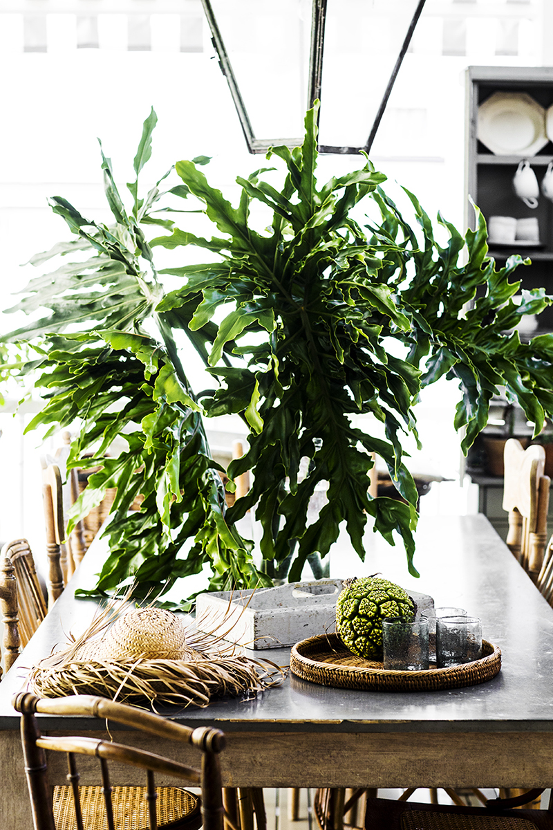 The home of Australian stylist and photographer Kara Rosenlund