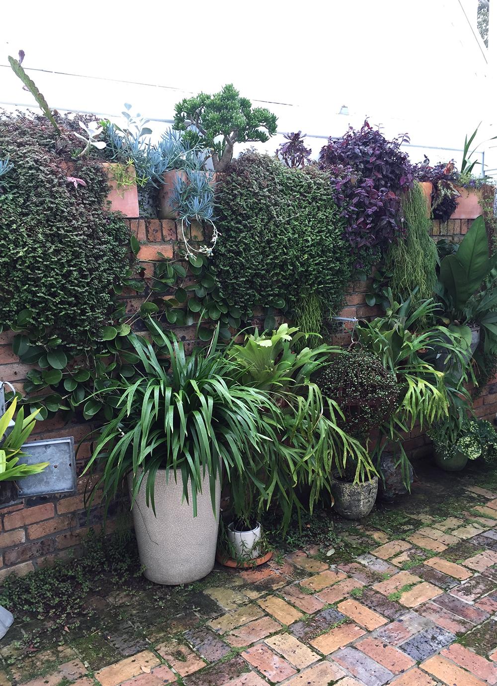 Leafy courtyard