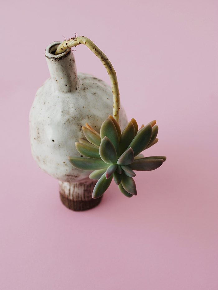 beautiful simplicity - succulents and handmade ceramics