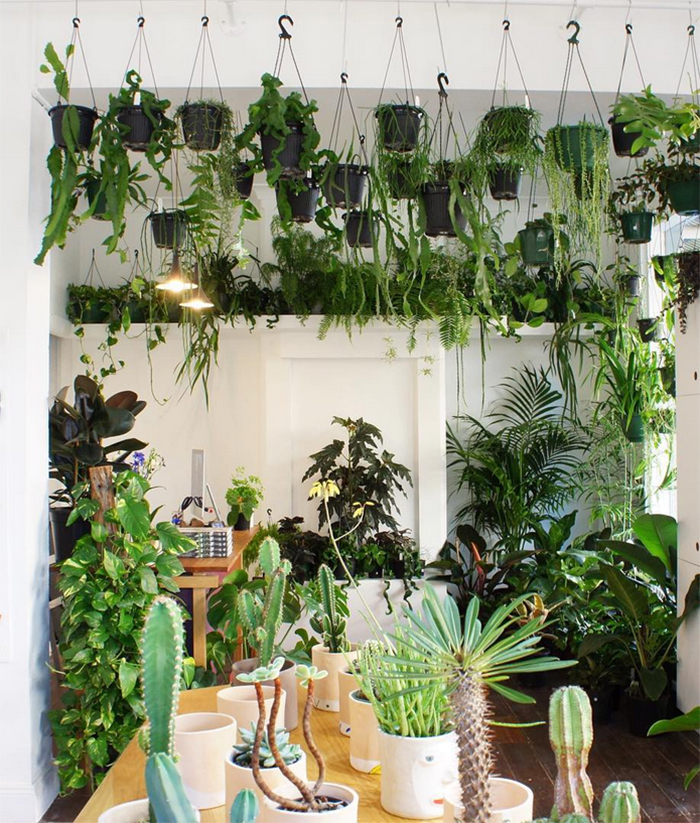 Plant shops in Aus - High Swan Dive