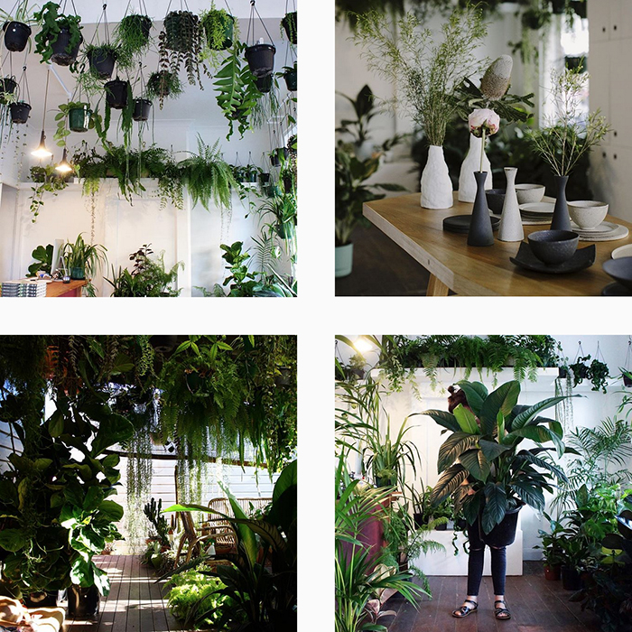 The best plant shops in Aus