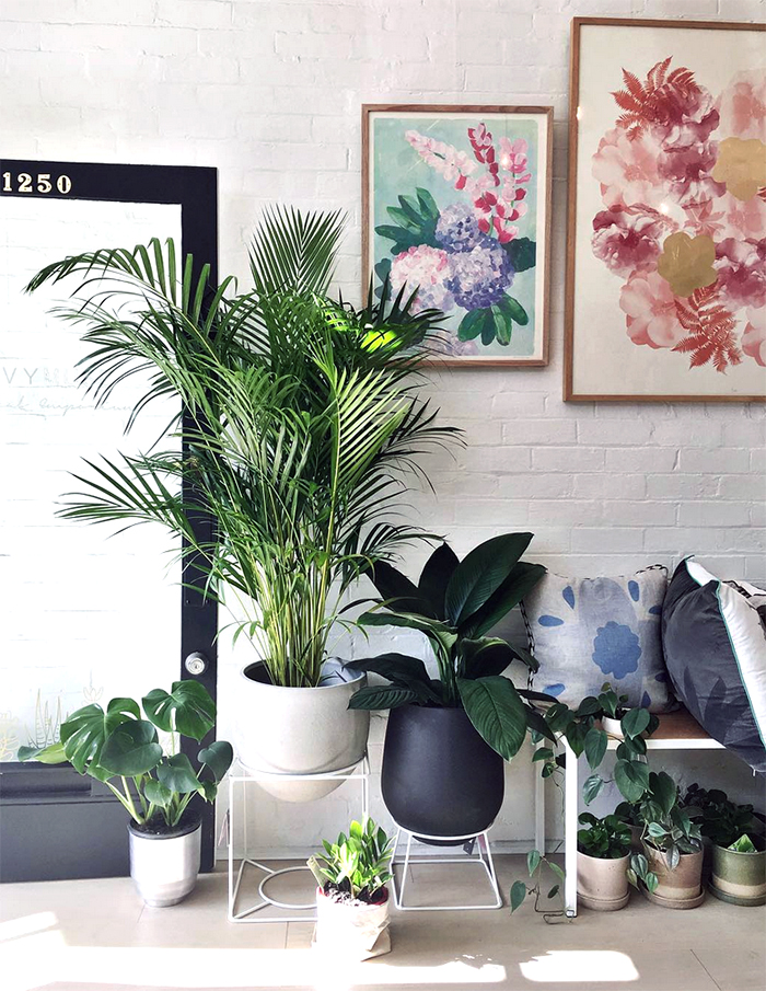 The best plant shops in Aus - Ivy Muse
