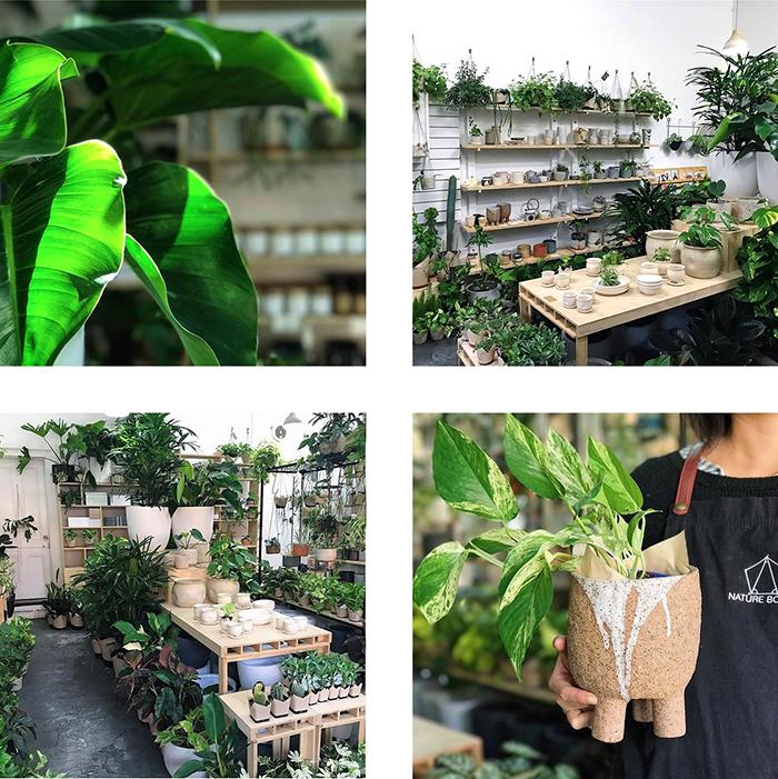 est plant shops round up - Nature Boy Nrth