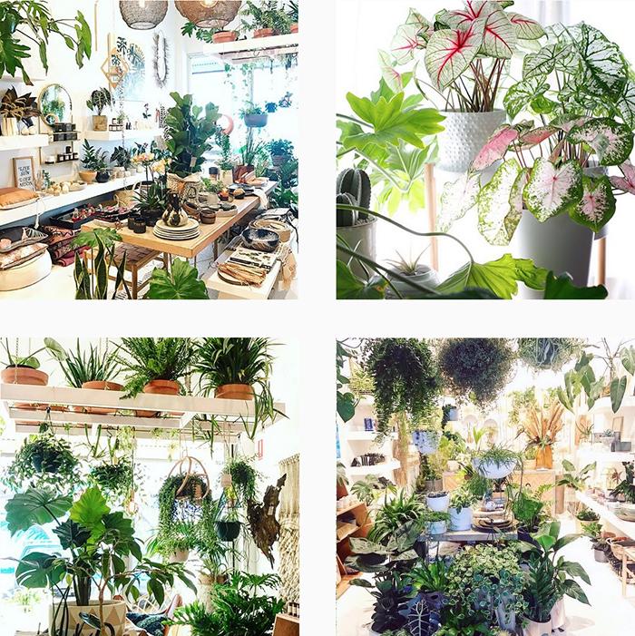 est plant shops round up - Nikau
