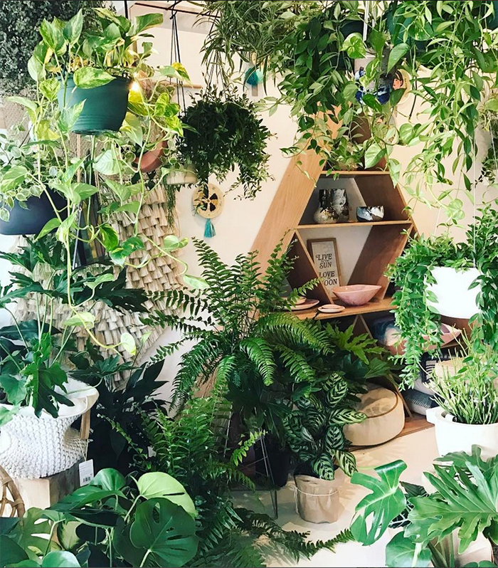 est plant shops round up - Nikau