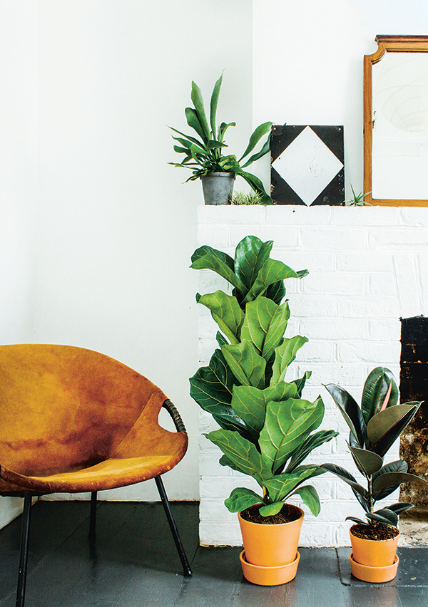 Green-up your home - how to choose and care for indoor plants