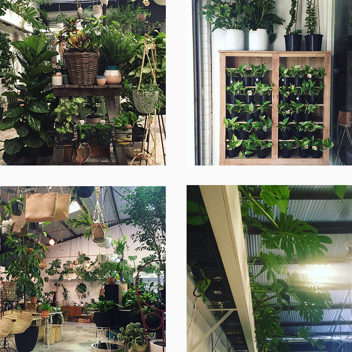 est plant shops - The Green Depot