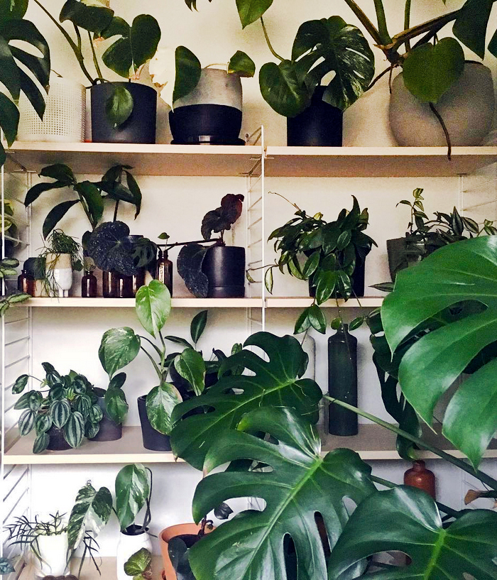 est plant shops - The Plant Society