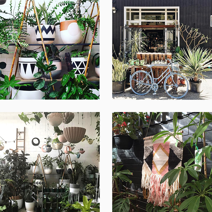 The best plant shops in Aus - Litte Leaf Co