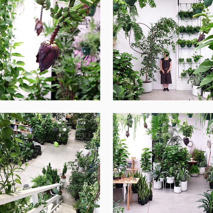 Loose leaf melbourne - best plant shops round up