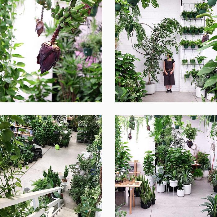 Loose leaf melbourne - best plant shops round up