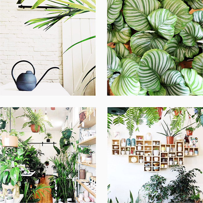 est plant shops round up - Mosey Store