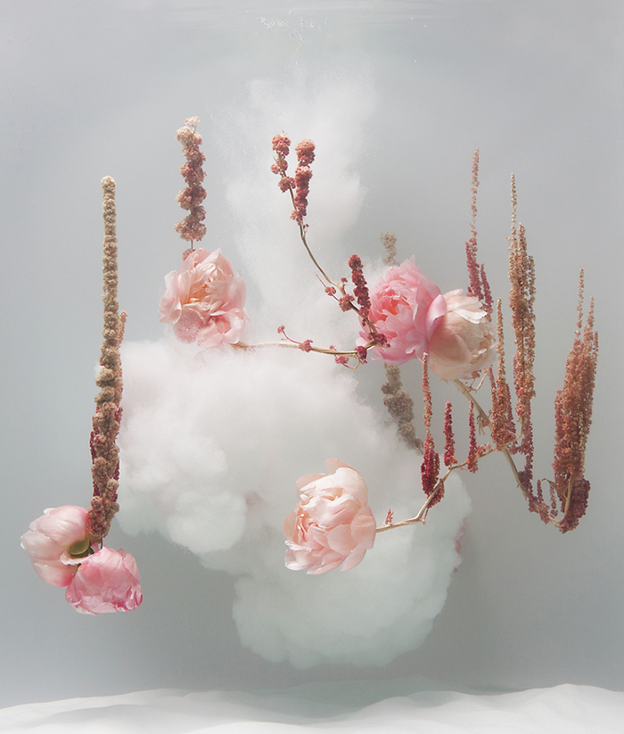 Anne Ten Donkelaar - flowers suspended underwater