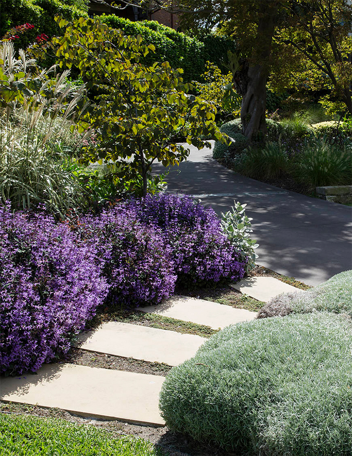 Another beautifully dense and well thought out front garden by Peter Fudge Design.