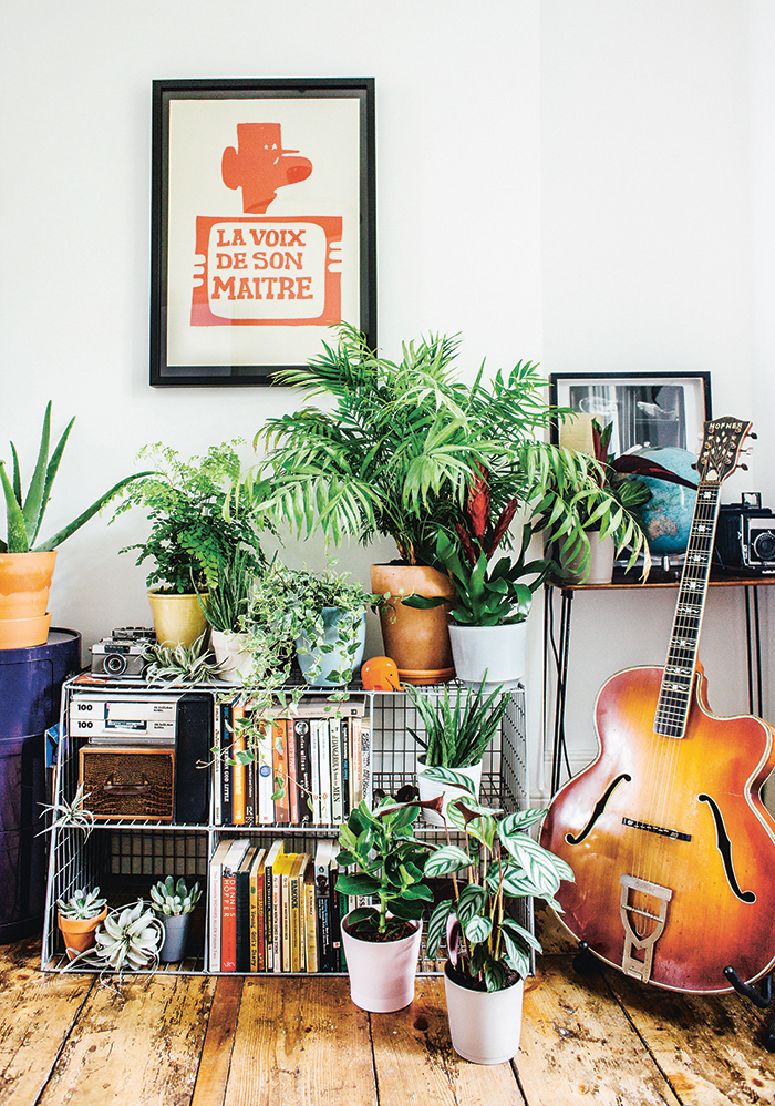 Great guide: how to choose and care for indoor plants